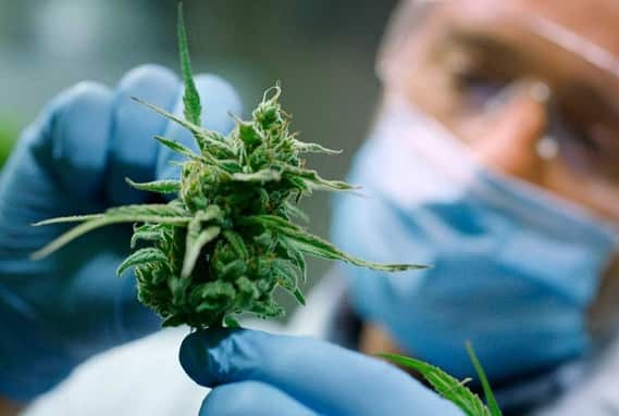 argentina legaliza el cannabis medicinal
