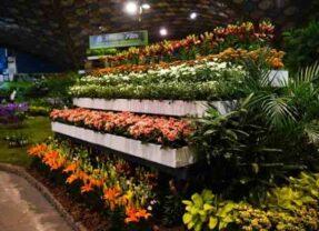 Fiesta Nacional de la Flor en Escobar: con la vuelta del público y grandes novedades